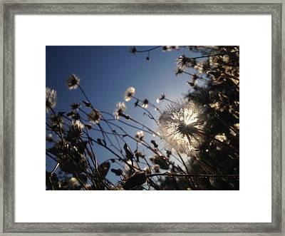 Celestial Dandelion Framed Print by Irene Zadorozhnaya