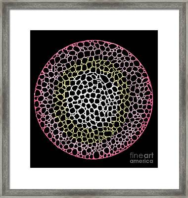 Cell Division Framed Print by Andy  Mercer