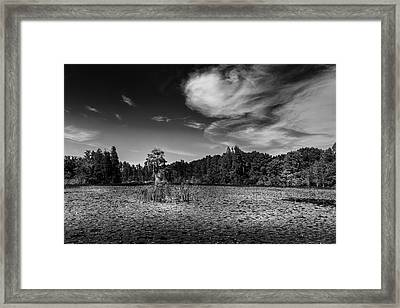 Center Cypress - Bw Framed Print by Marvin Spates