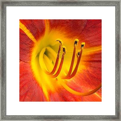 Center Of A Lily Framed Print by Jim Hughes