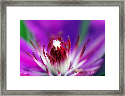 Center Of Attention  Framed Print by Don  Wright