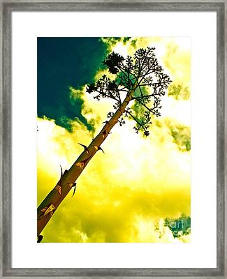 Century Plant Seed Stalk Framed Print by Chuck Taylor