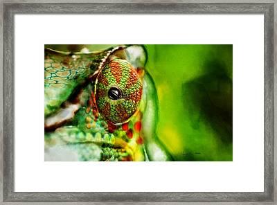 Chameleon ....  Framed Print by Jacqueline Schreiber