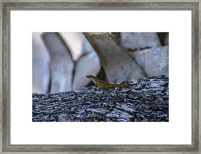 Chameleon Framed Print by Bill Cannon