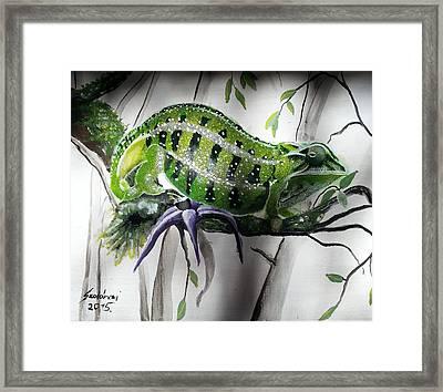 Chameleon Framed Print by Judit Szalanczi