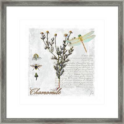 Chamomile Herb Dragonfly Botanical Illustration Art Framed Print by Tina Lavoie