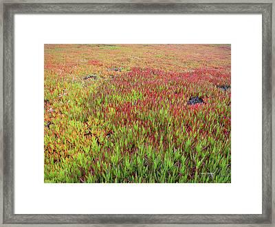 Changing Landscape II Framed Print by Donna Blackhall