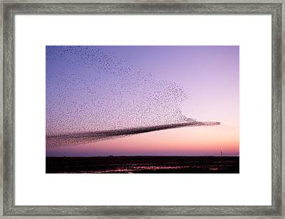 Chaos In Motion - Starling Murmuration Framed Print by Roeselien Raimond