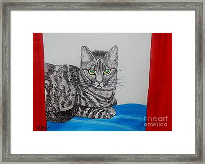 Charcoal Cat With Blue White And Red Framed Print by Caroline Street