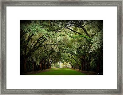 Charles Towne Landing 0198 Framed Print by Melissa Wyatt