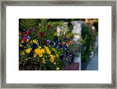 Charleston Flower Boxes Framed Print by Melissa Wyatt