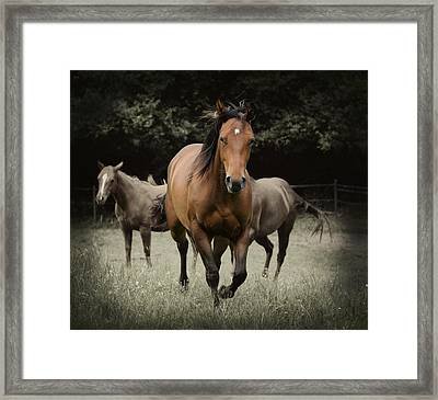 Charlie And Friends Framed Print by Jana Goode