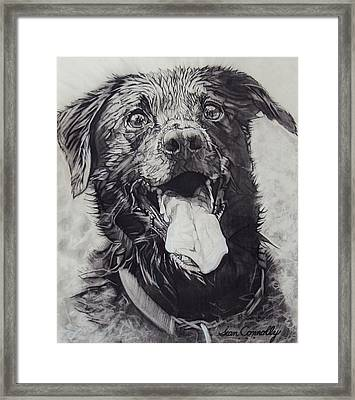 Charliedog Framed Print by Sean Connolly