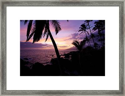 Charly Young Sunset Framed Print by James Roemmling