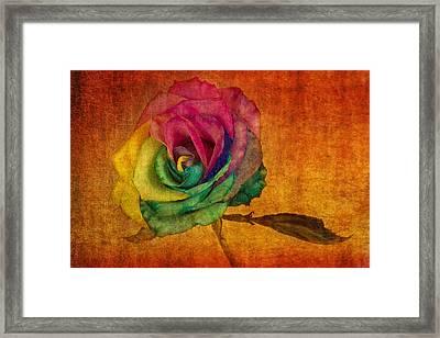 Chasing Rainbows Framed Print by Marina Kojukhova
