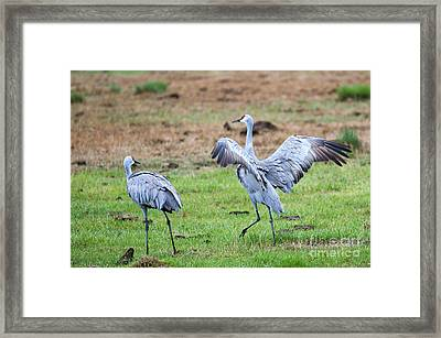 Check The Moves Framed Print by Mike Dawson