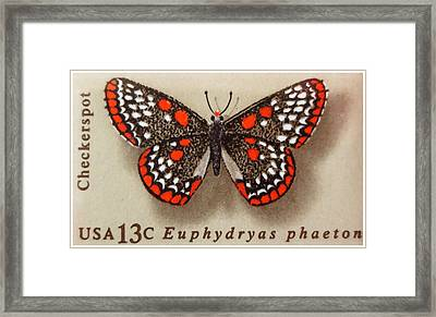 Checkerspot Butterfly Framed Print by Lanjee Chee