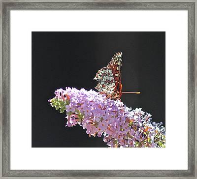 Checkerspot Butterfly Framed Print by Liz Vernand