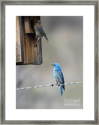 Checking The Nest Framed Print by Mike Dawson