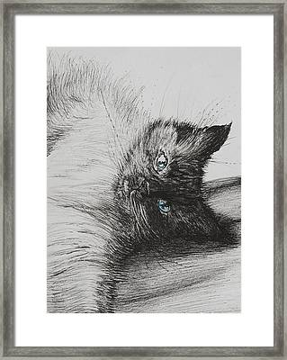 Cheeky Baby Framed Print by Vincent Alexander Booth