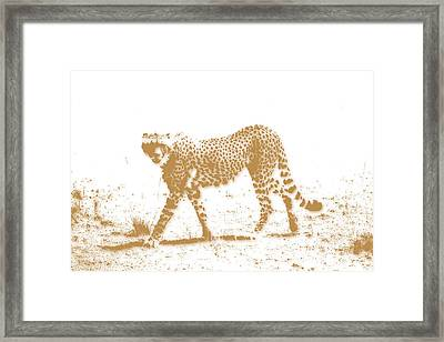 Cheetah 3 Framed Print by Joe Hamilton