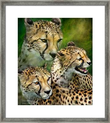 Cheetah Moods Framed Print by Carol Cavalaris