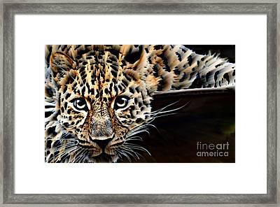 Cheetah On The Ledge Framed Print by Wbk