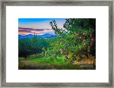 Chelan Apple Branch Framed Print by Inge Johnsson