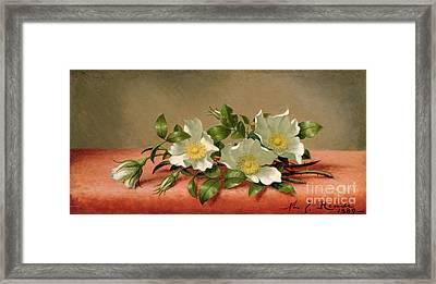 Cherokee Roses Framed Print by Martin Johnson Heade