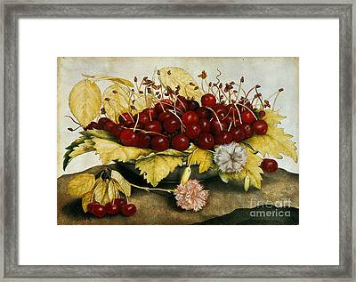 Cherries And Carnations Framed Print by Giovanna Garzoni