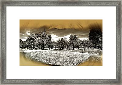 Cherry And Apple Trees In A Field Framed Print by Michael Naegele
