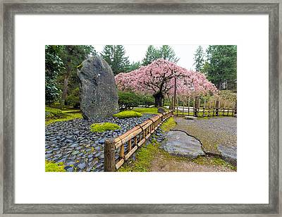 Cherry Blossom Tree By Natural Rock Framed Print by Jit Lim