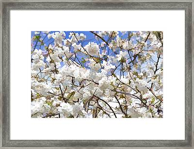 Cherry Blossom Trees Of Branch Brook Park 5 Framed Print by Allen Beatty