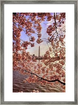 Cherry Blossoms And The Washington Monument Framed Print by Lois Bryan