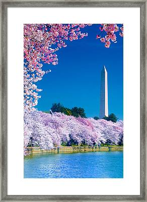 Cherry Blossoms Framed Print by Don Lovett
