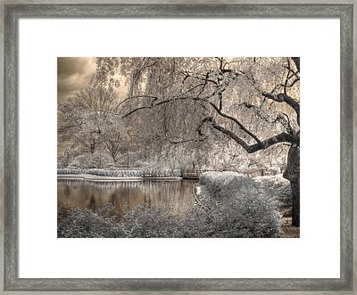 Cherry Blossoms Framed Print by Jane Linders
