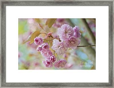 Cherry Delight Framed Print by Jacky Parker