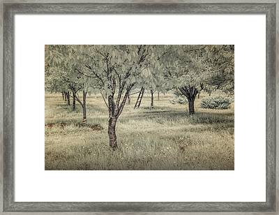Cherry Orchard In Infrared Framed Print by Randall Nyhof