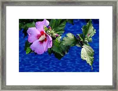 Cherry Throat Framed Print by Debbie Oppermann
