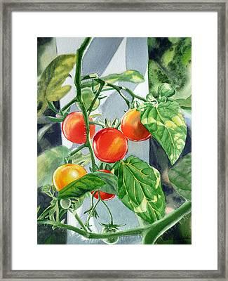 Cherry Tomatoes Framed Print by Irina Sztukowski