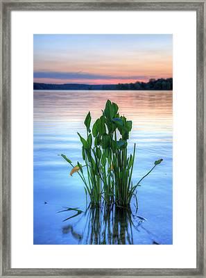 Chesapeake Bay Framed Print by JC Findley