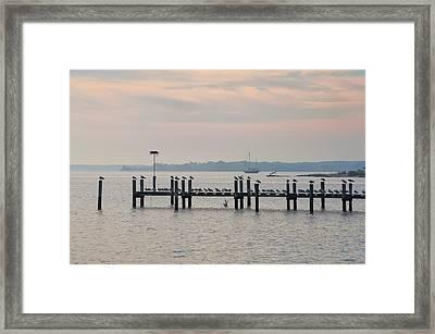 Chesapeake Seagulls Framed Print by Bill Cannon