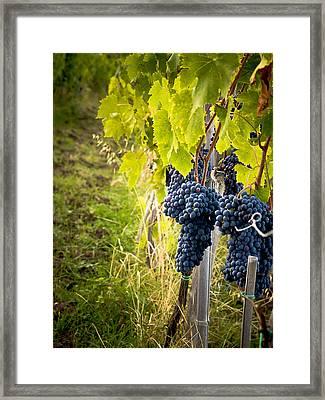 Chianti Grapes Framed Print by Jim DeLillo