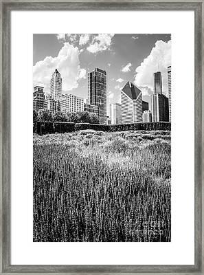 Chicago Skyline Lurie Garden Black And White Photo Framed Print by Paul Velgos