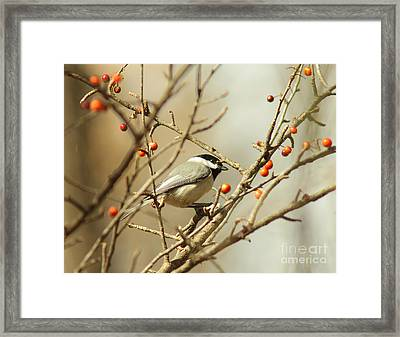Chickadee 2 Of 2 Framed Print by Robert Frederick