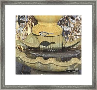 Chickadee-7 Framed Print by Robert Pearson