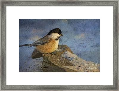 Chickadee Winter Perch Framed Print by Deborah Benoit