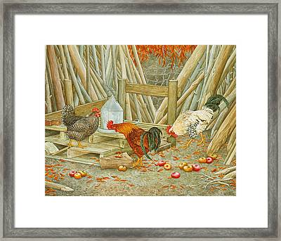 Chicken Feed Framed Print by Ditz
