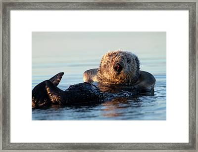 Chillin' Framed Print by Craig Sanders