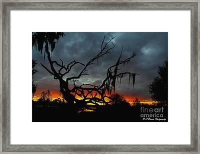 Chilling Sunset Framed Print by Barbara Bowen
